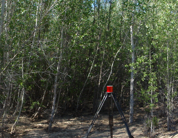 Retroreflective target nested among cottonwood trees.  Larger vegetation had to be scanned early in the morning due to winds that would pick up steadily in the afternoons. Photo by Sarah Doelger.