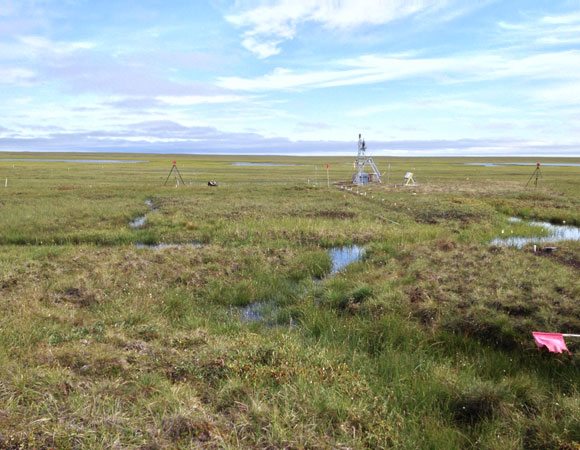 A nice day on the northern slope tundra at the Atqasuk ITEX NIMS site. Photo provided by Brendan Hodge.