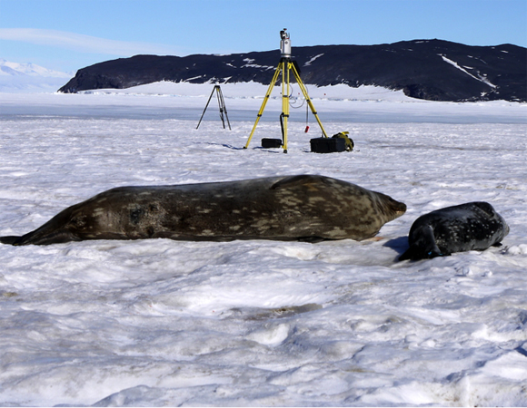 A Weddell seal pup and mother bask in front of a UNAVCO TLS instrument deployed on the sea ice in McMurdo Sound.  LiDAR data is used to produce mass estimates of the mother and pup to understand their physiological relationships before weaning. A curious skua joins the scene, with Tent Island rising from the sea ice in the near distance. Photo by Brendan Hodge.