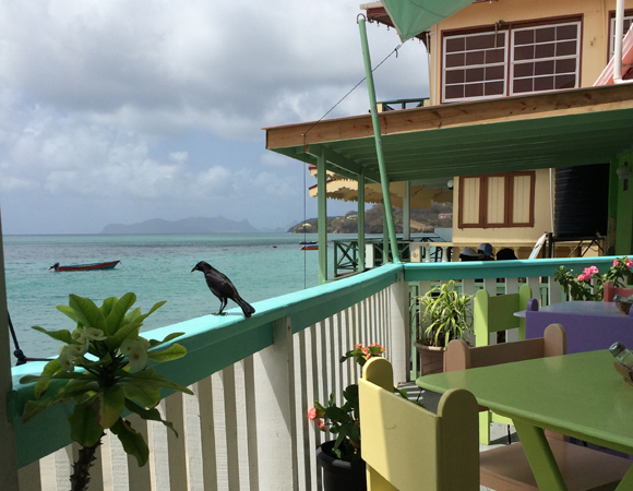 Blackbird basking in the sun at the favorite lunch spot in Carriacou. (Photo by Jacob Sklar, UNAVCO)