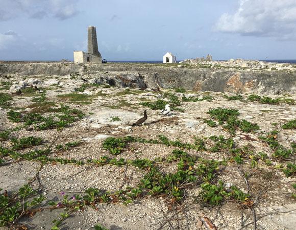 Brown boobies on Sombrero Island, Anguilla. (Photo/John Sandru, UNAVCO)
