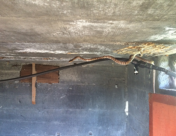 A snake escaping the heat of the day at CNG2 near Cerro Negro Volcano. (Photo/Mike Fend, UNAVCO)