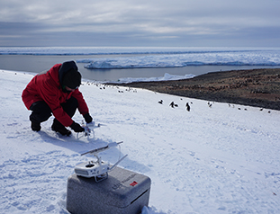 A Less Invasive, More Accurate Way to Survey Penguin Colonies