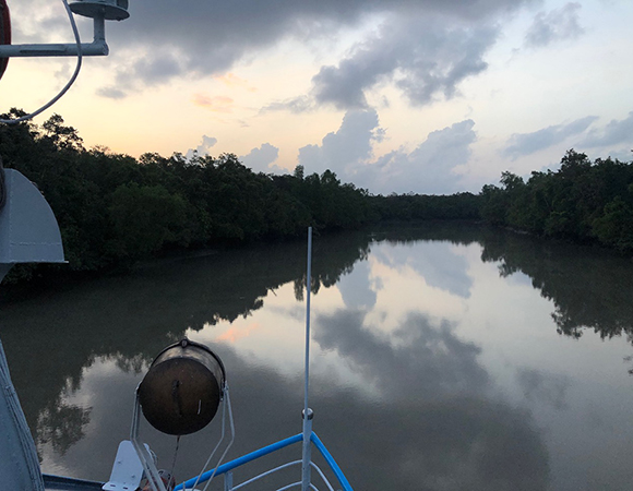View looking off the bow of the Bawali as it travels on a tide channel in the Sundarbans in the early morning hours. No Bengal tigers to be seen because of the thick mangrove vegetation, but they could probably see the boat. (Photo/John Galetzka, UNAVCO)
