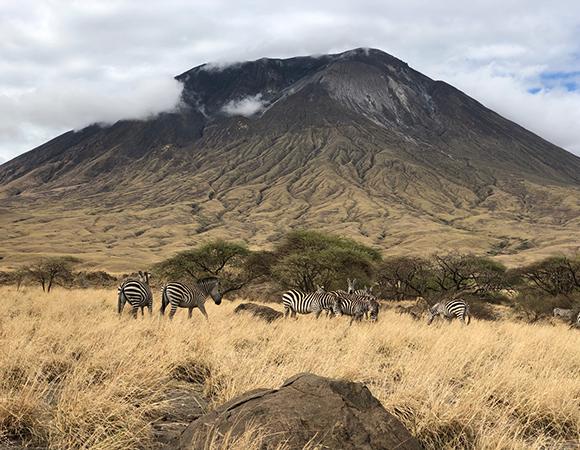 Zebras on the east side of Ol Doinyo Lengai. (Photo/John Galetzka, UNAVCO)
