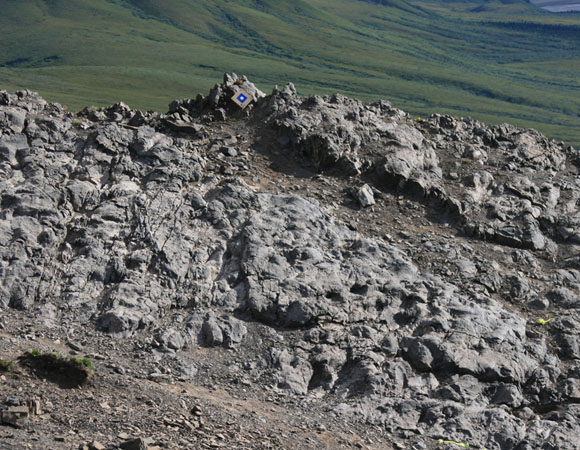 Dinosaur tracksite in Denali National Park and Preserve. Photograph courtesy of the Perot Museum of Nature and Science.