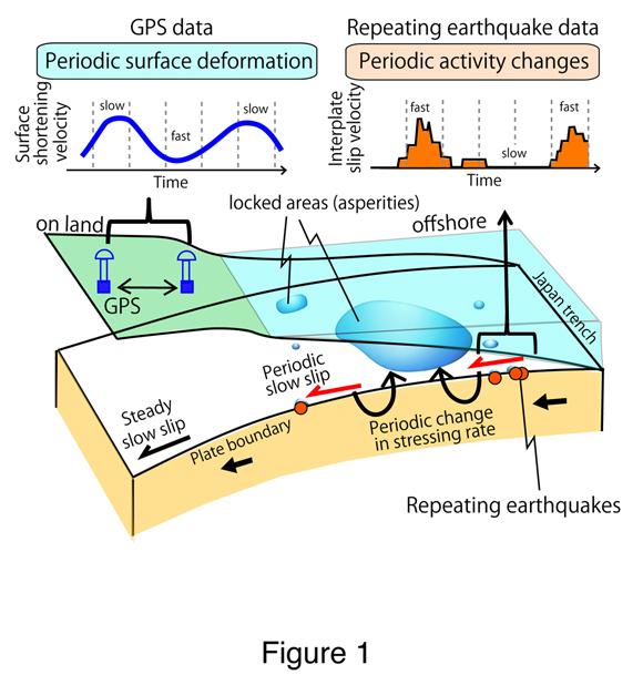 Schematic figure showing the tectonic setting onshore and offshore of Sanriku, Japan with the generalized locations of asperities, major earthquakes and small, repeating earthquakes. The graphs above the schematic show the relations between the rate of deformation from GPS and seismic data. Figure courtesy of Naoki Uchida.
